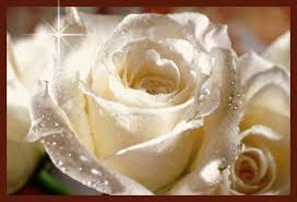 white roses star yes